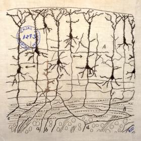 Embroidery of Cajal illustration of a cortical neuronal network